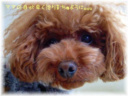 20090120_1.jpg