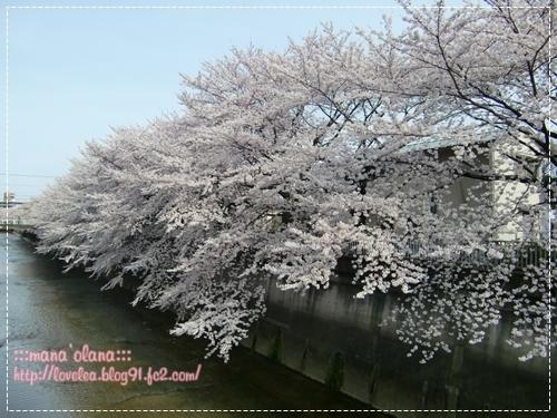 20090407_02.jpg