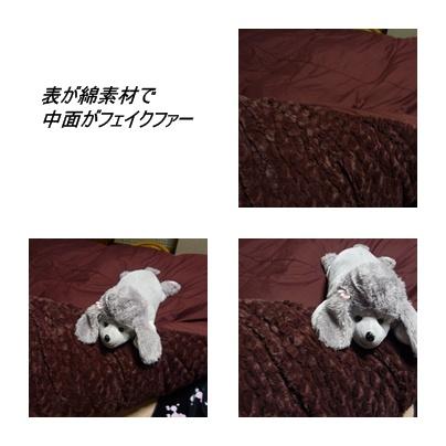cats2_20091126215328.jpg