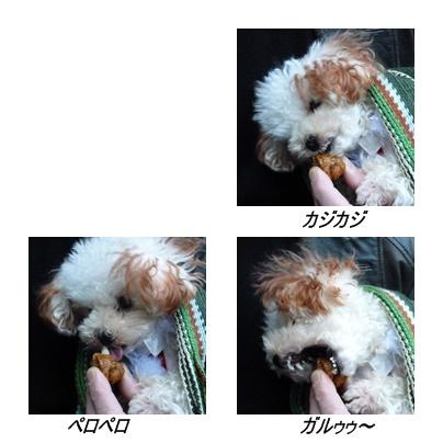 cats2_20091207195456.jpg