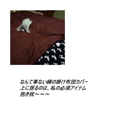 cats3_20091126215339.jpg