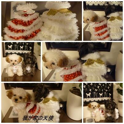 cats6_20091208094730.jpg