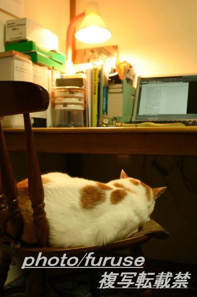机と明かりとチコ_1文字