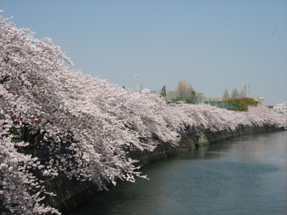 桜廻り13