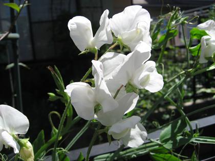 花よりも1
