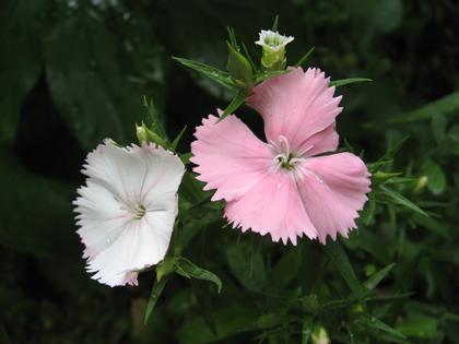 花よりも3