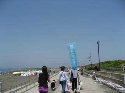海岸清掃8