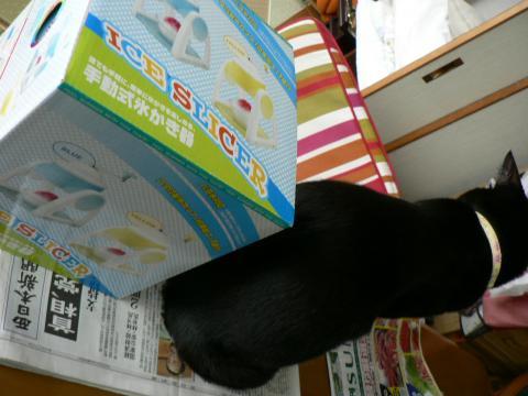 きなっちゃん社長&カキ氷器