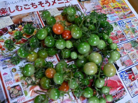 11月21日収穫のミニトマト