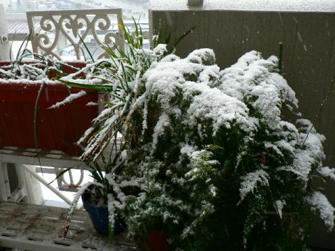 2009年1月24日雪景色