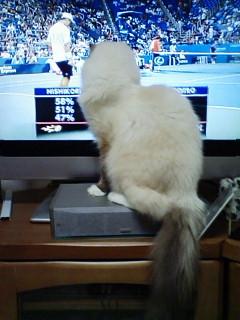 ネコちゃんのテニス観戦