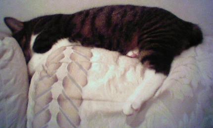ミュ寝正月