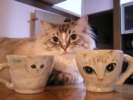 ムックカップ2