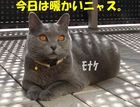 モナケちゃん