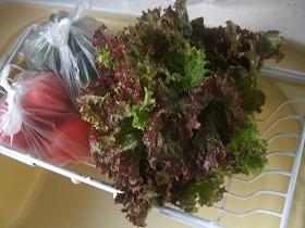 実家産野菜