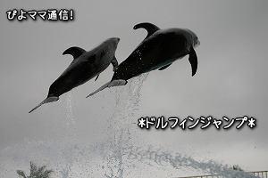 イルカジャンプ