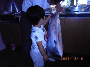 鮭との触れ合い