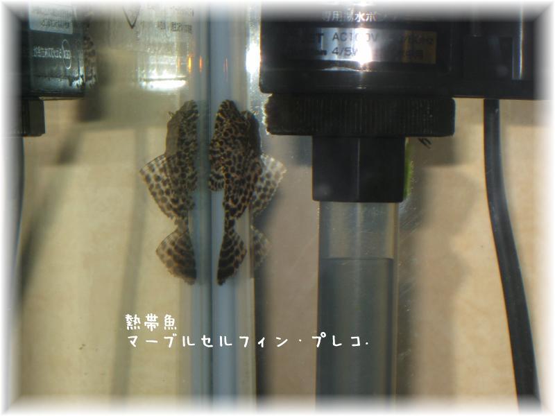 20080220-2.jpg