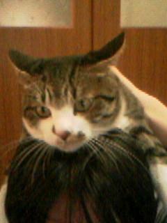 リアル猫帽子