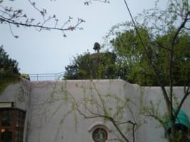 mitaka-ghibli-museum2.jpg