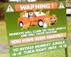 be wear of the monkeys