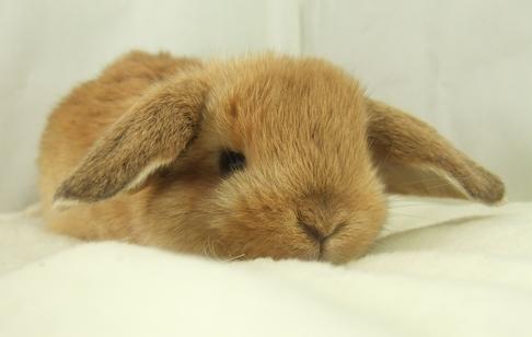 bunny2a.jpg