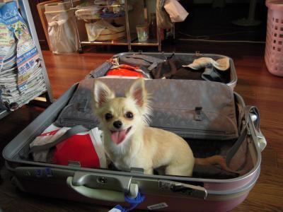 9月5日 スーツケース