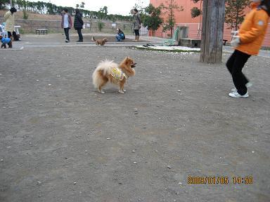 広場で遊ぶ