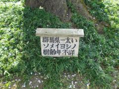 090406_世良田東照宮桜 (3)