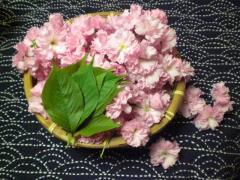 090417_桜塩漬け (1)