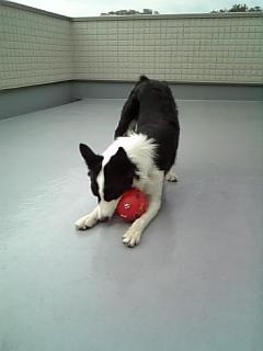 ボール遊び。