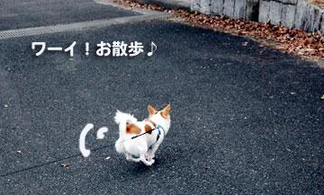お散歩でしゅ!