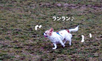 走るの好きでしゅ!
