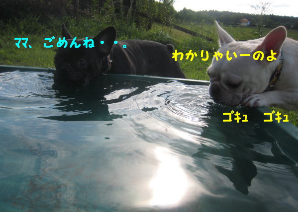 IMG_3403.jpg