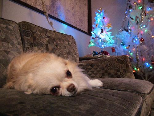 ax_christmas.jpg