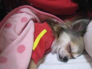 0101 021 くるみはママの布団で寝る