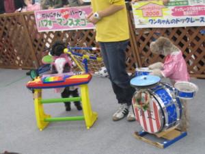 0106 004 楽器演奏のプードル