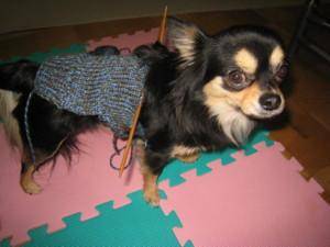 0111 001 マロンの編みかけセーター試着