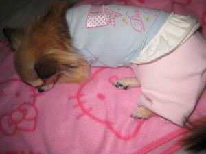 0120 015 くるみの寝てる姿