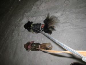 0214 007 行く時の雪道歩くマロくる