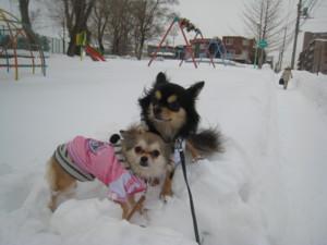 0222 005 すごい雪の公園