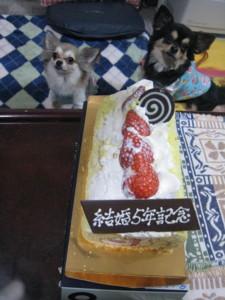 0321 003 ケーキ&マロくる