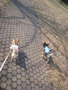 0406 001 中島公園お散歩マロくる