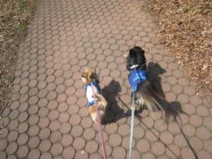 0419 003 公園内お散歩のマロくる