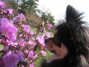 0419 014 花とマロン