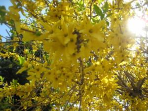0506 010 黄色いお花