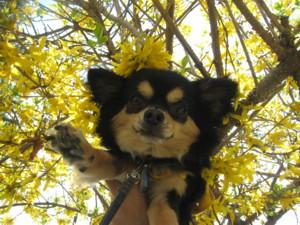 0506 011 黄色のお花とマロン