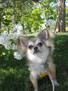 0510 006 公園で白いお花とくるみ