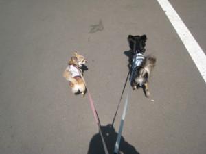 0511 005 お散歩へGO~