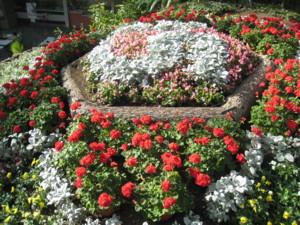 0513 007 ファクトリーお花畑